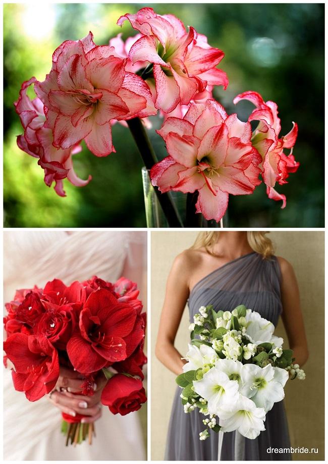 цветы для букетов фото и название: амариллисы