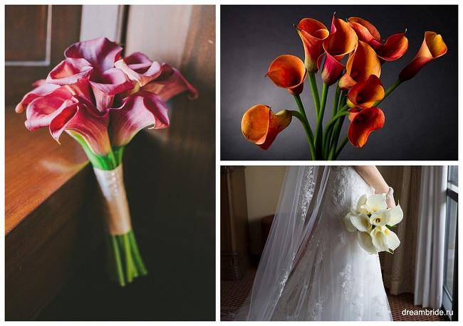 цветы для букетов фото и название: каллы белые, оранжевые, розовые
