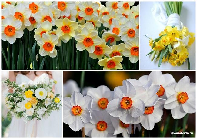 цветы для букетов фото и название: нарциссы