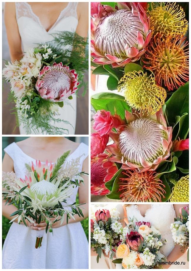 цветы для букетов фото и название: протея