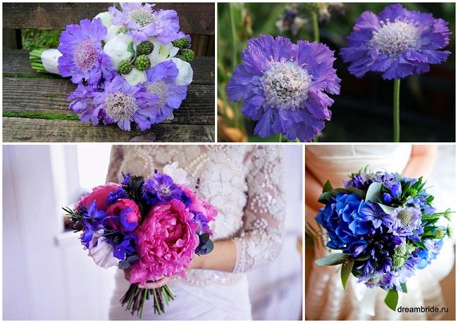 цветы для букетов фото и название: скабиоза